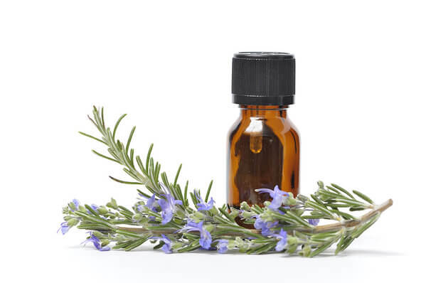 Essential oil with fresh rosemary to fight aphids