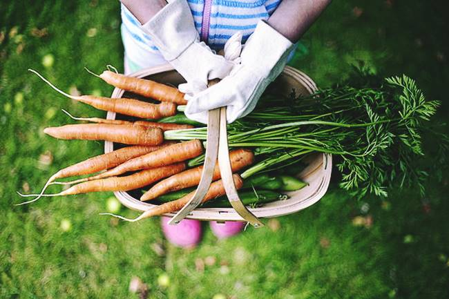 How long do carrots take to grow in containers