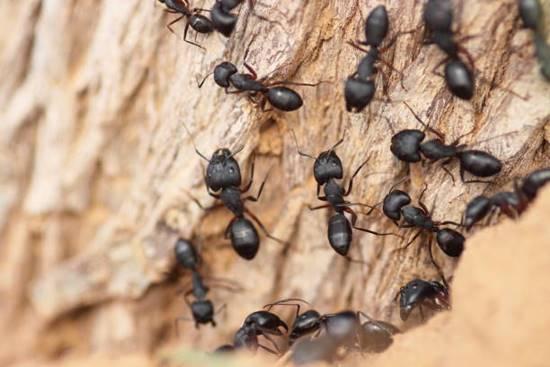 Control Ants