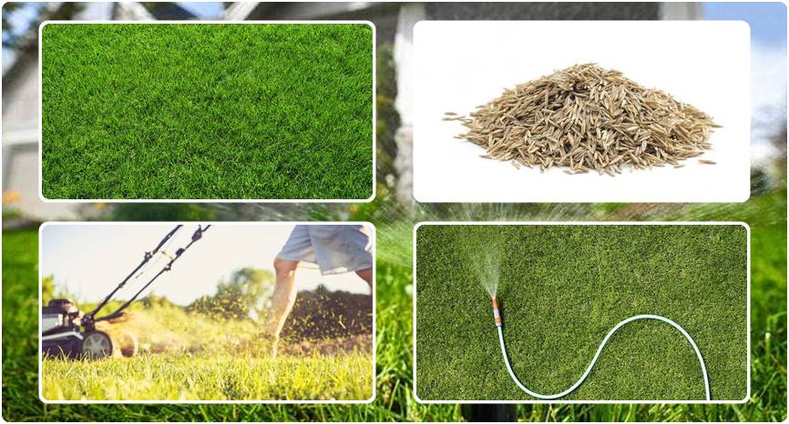 How Long Does it Take For Grass to Grow | The Detailed ...