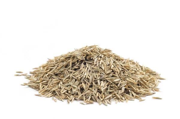 Heap of grass seed