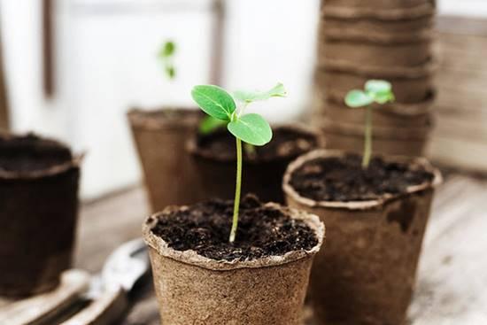 Save Seedlings