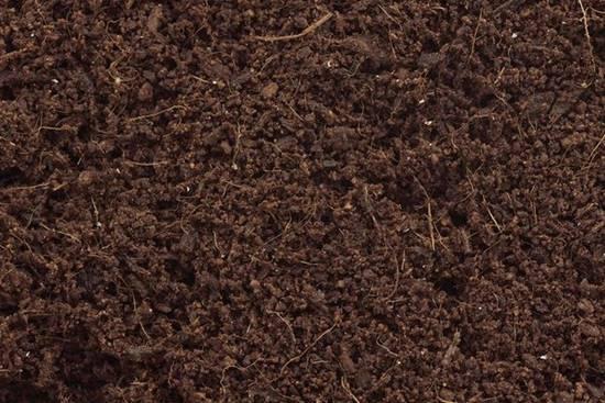 Coconut coir amended soil