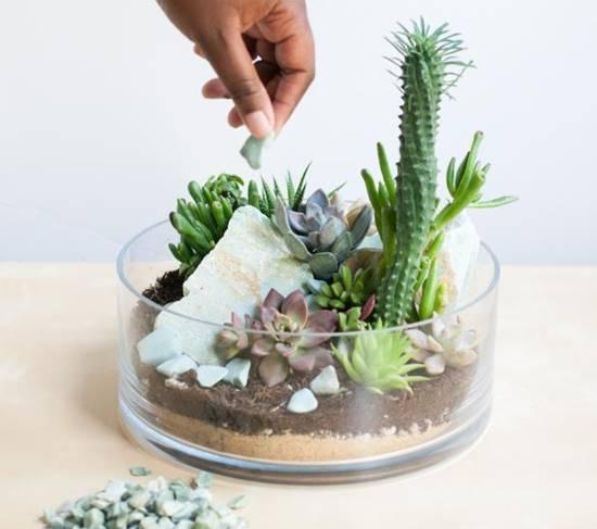 tabletop succulent terrarium