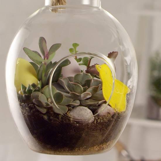 diy succulent hanging terrarium