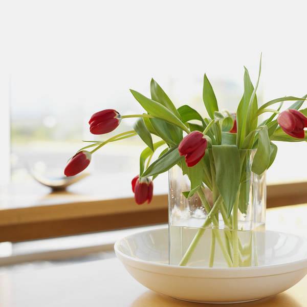 tulips in a flower vase