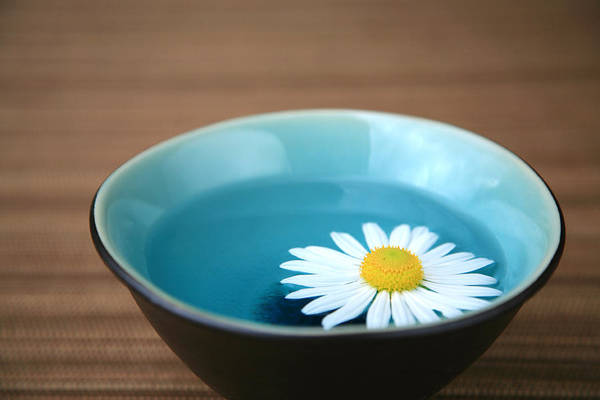 water bowl with daizy flower floating