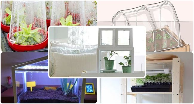 The Complete Beginners Guide to Indoor Greenhouse