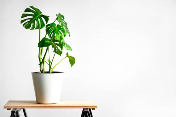 houseplant on table top