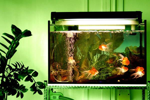 aquarium raises humidity