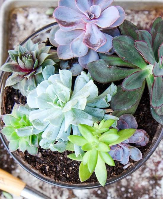 how to make succulent terrarium