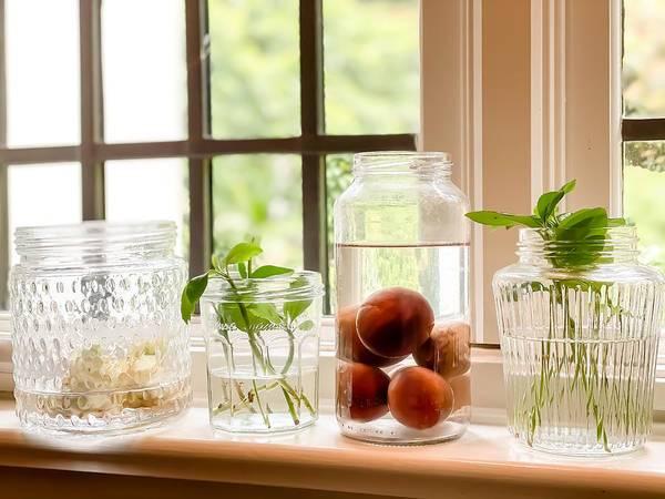 plants growing in water on windowsill