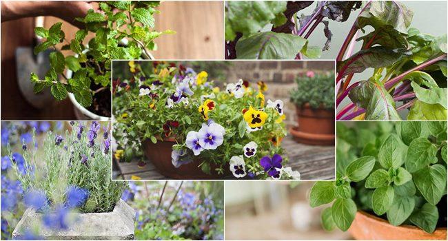Best Plants for Shallow Pots