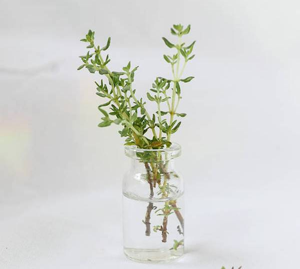 thyme herb in bottle