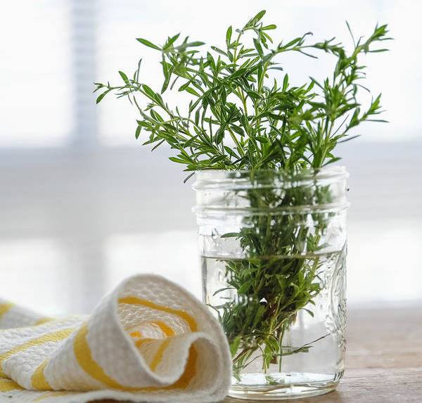 rosemary in water
