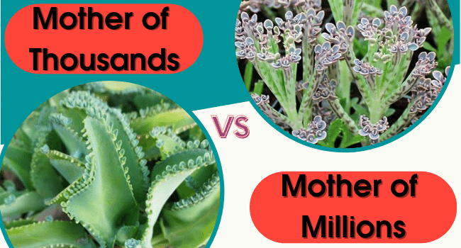 Mother of Millions Vs Mother of Thousands
