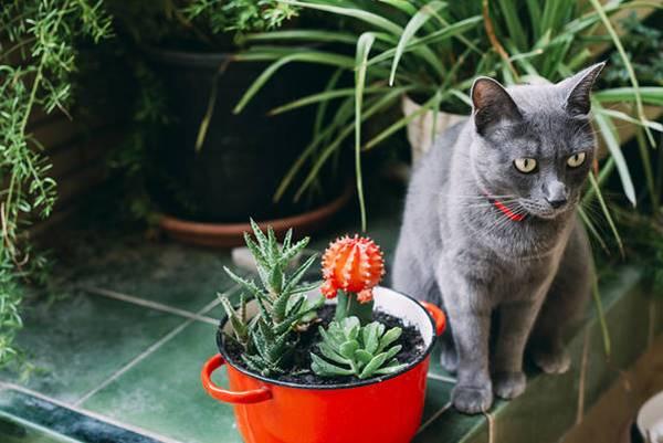 cat and succulent