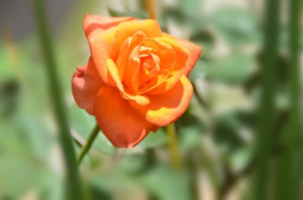 close up of orange bloom