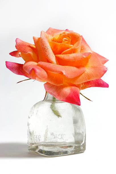 orange rose in jar