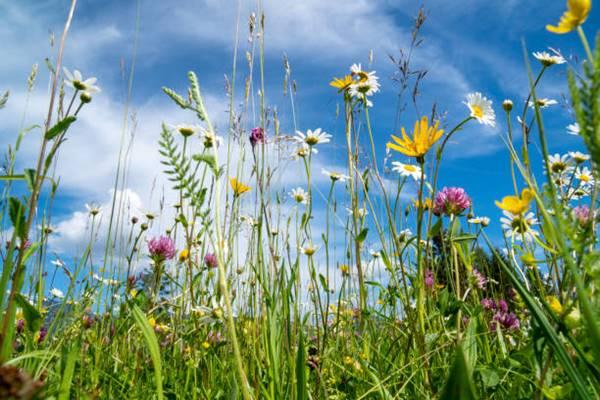 Mesophytic plants in meadow