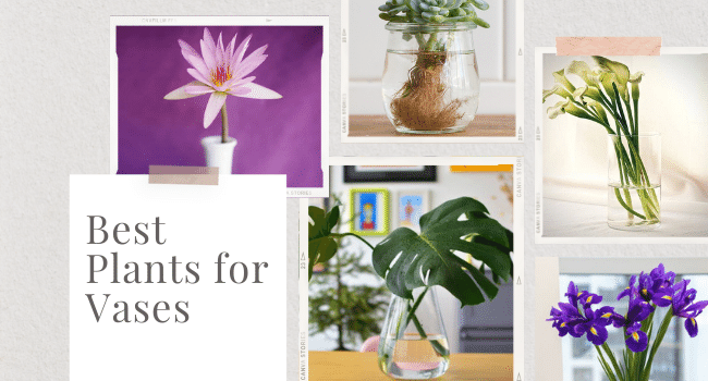 plants for vases