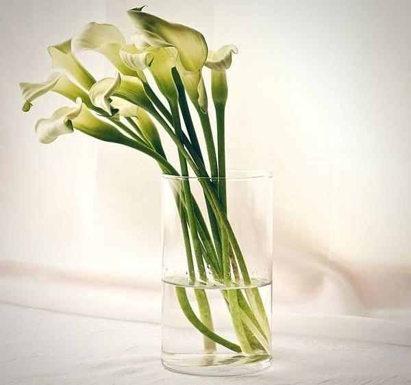 calla lilies in transparent vase