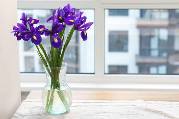 water iris in transparent vase