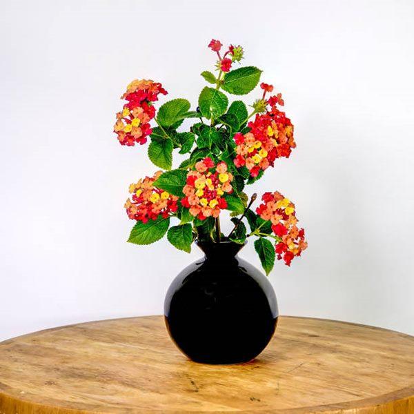 Begonia in a vase