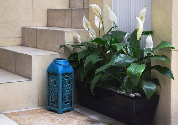 peace lily in pot near staicase