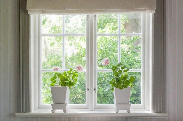 Geraniums on windowsill in pot