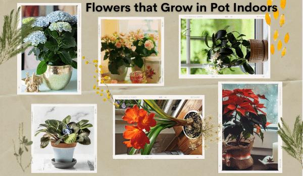 Flowers that Grow in Pots Indoors