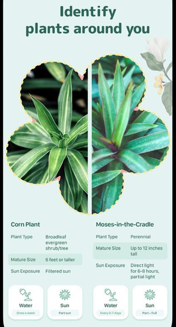 iOS Plant identifier app