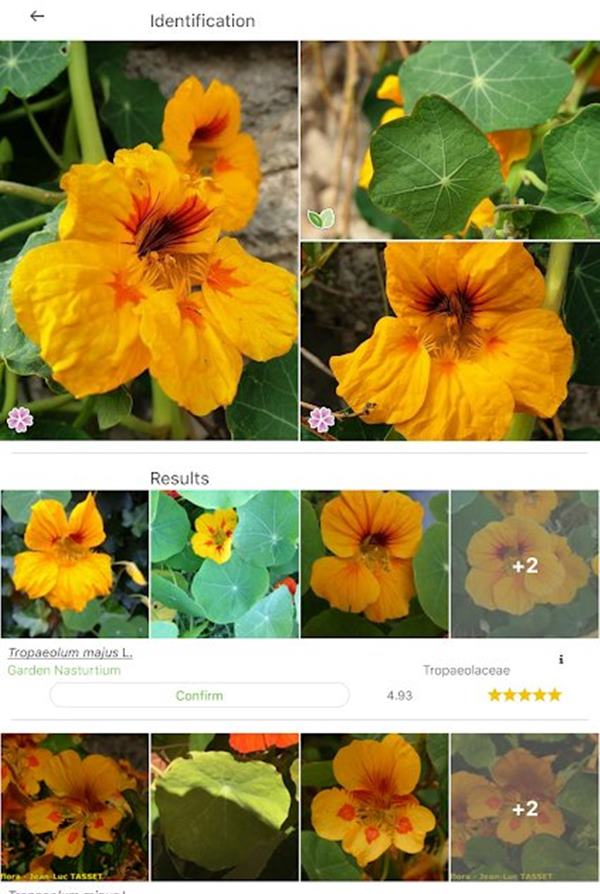 PlantNet Plant Identification application