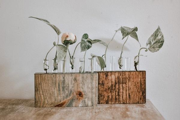 diy wooden propagation planter